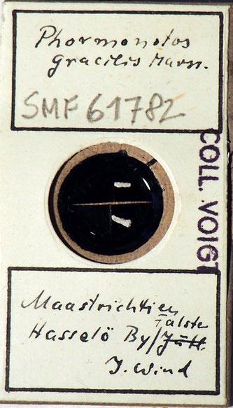Bild 7 Bryozoa aus Sammlung Senckenberg Frankfurt