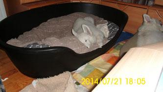 Müdigkeit und ein neues Betti!
