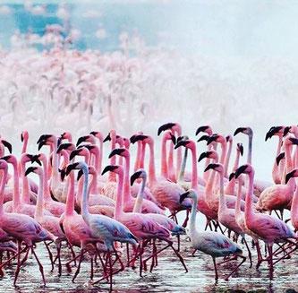 ich bin verknallt in diese Vögel... lass dich inspirieren :)