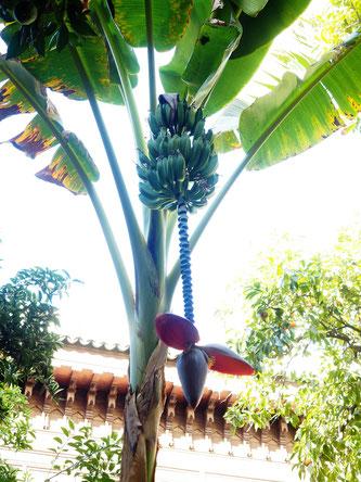 Früchte in Marokko