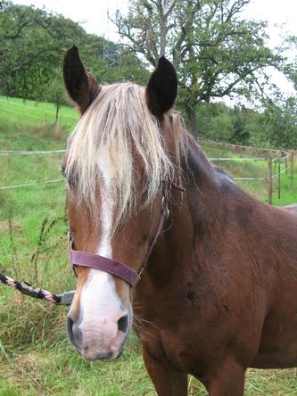 Das erste eigene Pferd, Majana