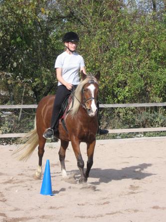 Von der Reitbeteiligung zum ersten eigenen Pferd