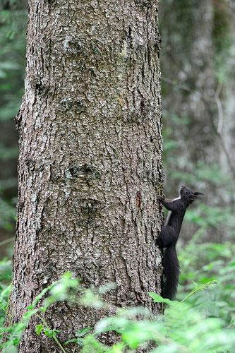"""""""huch, ist der Baum hoch"""""""