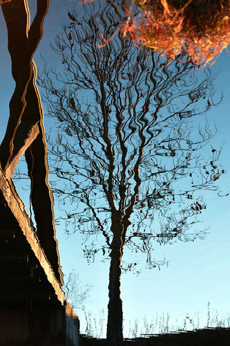 Der Baum im Wasser