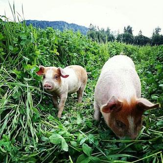 økologisk mat økogris økologisk mål