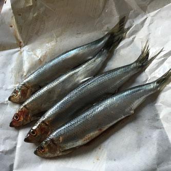 sild oppskrift stekt billig mat fisk