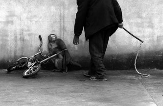 Monkey training for a circus - Yongzhi Chu