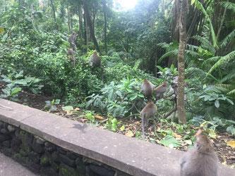Monkey Forest, Ubud, Affenwald