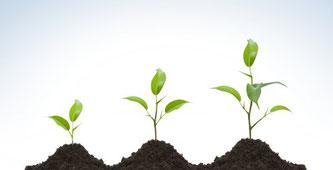 Organízate para crecer - AorganiZarte