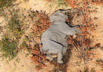 Bis heute hat sich die Zahl der verstorbenen Tiere mehr als verdoppelt (Bildquelle: skynews)