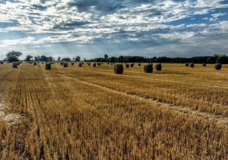 Der biologische Landbau ist weiter auf dem Vormarsch.
