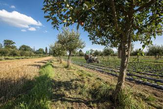 Foto: Gabriela Brändle, Agroscope
