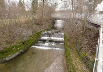 Schwellenpassage in Mönchaltorf behindert Fischwanderung.