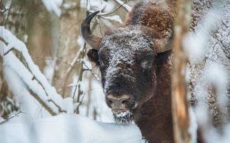 Bildquelle: WWF