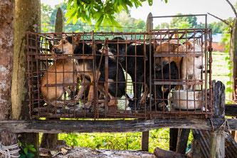 In Südostasien floriert der Handel mit Haustieren trotz schwerwiegenden Gesundheitsrisiken.  Bildquelle: Tierschutzorganisation Vier Pfoten