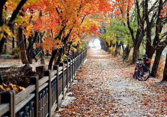 Pixabay.com ©KIMDAEJEUNG CC0 Public Domain  Mit der richtigen Ausrüstung muss man auch im Herbst das Fahrrad nicht stehen lassen.