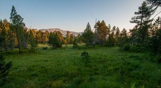 Hochmoor «Gross Gfäl» in der Gemeinde Flühli. Für wassergeprägte Lebensräume, wie dieses Moor, trägt der Kanton Luzern eine besondere Verantwortung. Bild: Dienststelle Landwirtschaft und Wald, Luzern