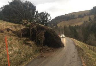 Le canton de Fribourg fortement touché par la tempête « CIARA » / Der Kanton Freiburg wurde vom Sturm «SABINE» heimgesucht © Tous droits réservés
