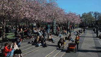 Die Menschen geniessen die Sonne in einem Park in Schweden (Quelle: Maxim Thore/Bildbyran via ZUMA P)