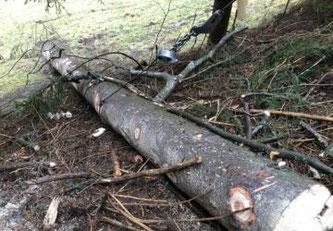 Ein Mann verletzt sich bei einem Holzfällerunfall in Charmey ©