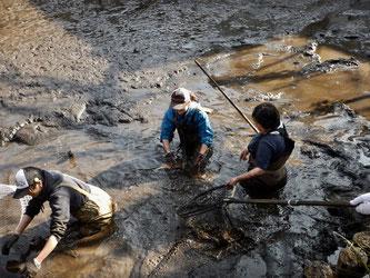 カイボリは泥沼との戦い