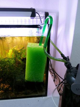 Filterpatronen schützen Jungfische, erhätlich sind solche Patronen in Shops für Teichzubehör, oder natürlich bei Ebay.