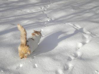 Eine Katze hinterlässt Spuren im Schnee