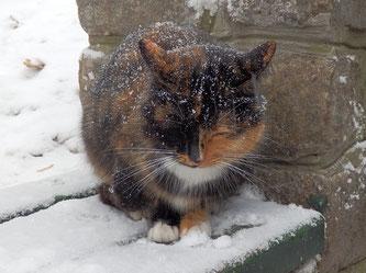 Körperhaltung einer Katze beim frieren