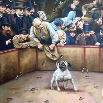Storia dello Staffordshire bull terrier ratting e dog fighting