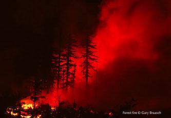 Waldbrand. (c) Gary Braasch