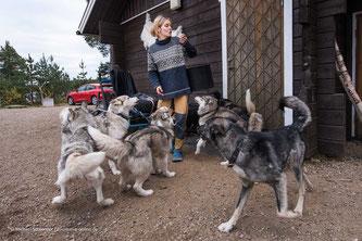 Huskies auf der Huskyfarm Nomadic Naali