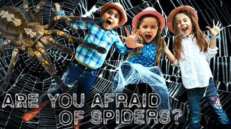 spiders, orb weaver spider, orb weaver spider facts