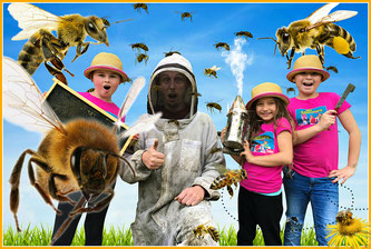 bees, honey bees, bees for kids, bee facts
