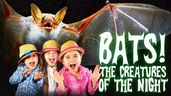 bats for kids, bats, all about bats, the creatures of the night, facts