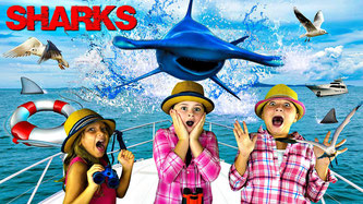 sharks, hammerhead sharks, hammerhead shark video