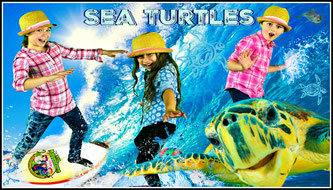 sea turtles, sea turtle facts, ocean, wild adventure girls video