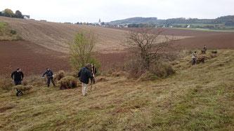Abräumen des Mahdgutes im NSG Dünscheder Heide