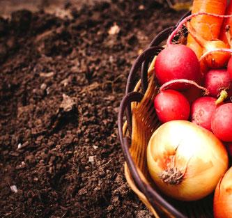 腸は根っ子であり、土壌そのもの