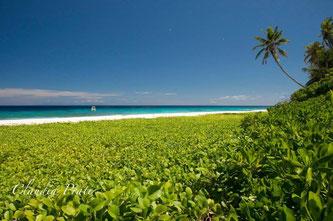 spiagge Seychelles isola Aride