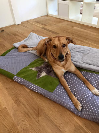 Kuscheldecke Decke Nähkurs Einzignartig Patchworkdecke Uli Hundedecke