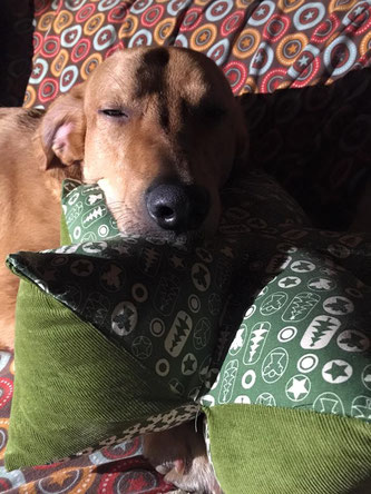 Sternenkissen, Einzig-n-Artig, Uli, Sternenkissen Hund