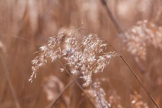 ©アポワンティ フード&サイエンス バセドウ病のための花粉症対策をしましょう