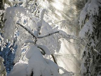 Copyright, AincaArt, Ainca Kira, Foto und Text, Writer, Photographer, Photography, Winter, Schnee, Schneeflattern, Schneevorhang