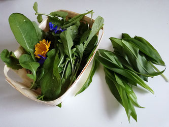 Ernte. Rucola/Rauke, Ringelblume/Calendula/ Borretsch, Bärlauch - Harvest. Arugula, marigold/calendula, borage, wild garlic