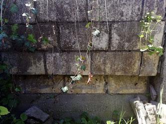 Die Mauer war vorher schon stark nach vorne geneigt, doch im letzten Winter begann die eine Steinmauer zu rutschen - The wall had already leaned forward sharply, but one stone row began to slide last winter