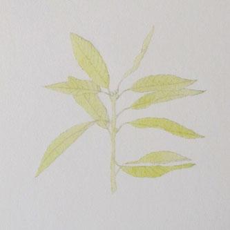 水彩画 ボタニカル 描き方