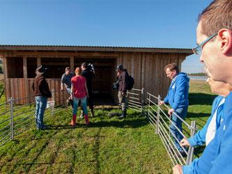 Auch das Abweiden der Tiere ist gefilmt worden. - Foto: Kathy Büscher