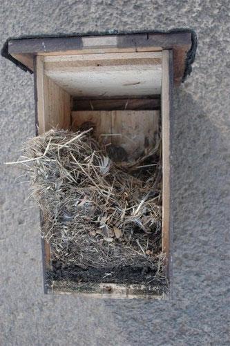 Überraschungsgast: In einigen Nistkästen haben Mäuse Zuflucht gesucht. - Foto: Britta Raabe