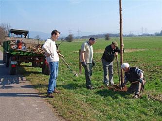 Greifvogelkrücken werden in der Feldmark aufgestellt. - Foto: Kathy Büscher