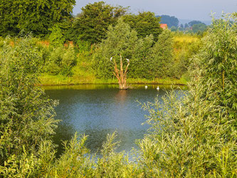 Die Natur soll in der Weserschleife bei Rinteln einen Rückzugsraum wie in der Auenlandschaft Hohenrode erhalten. - Foto: Kathy Büscher